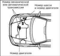 1.3 Идентификационные номера автомобиля